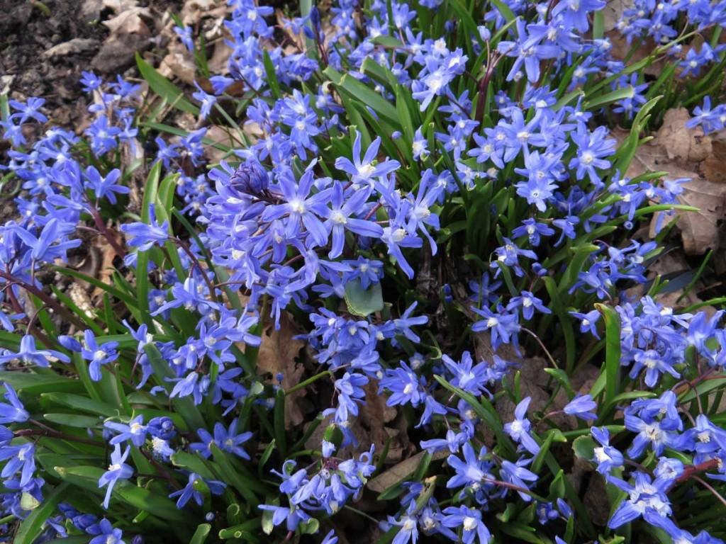 Emerging Spring Garden Mentor