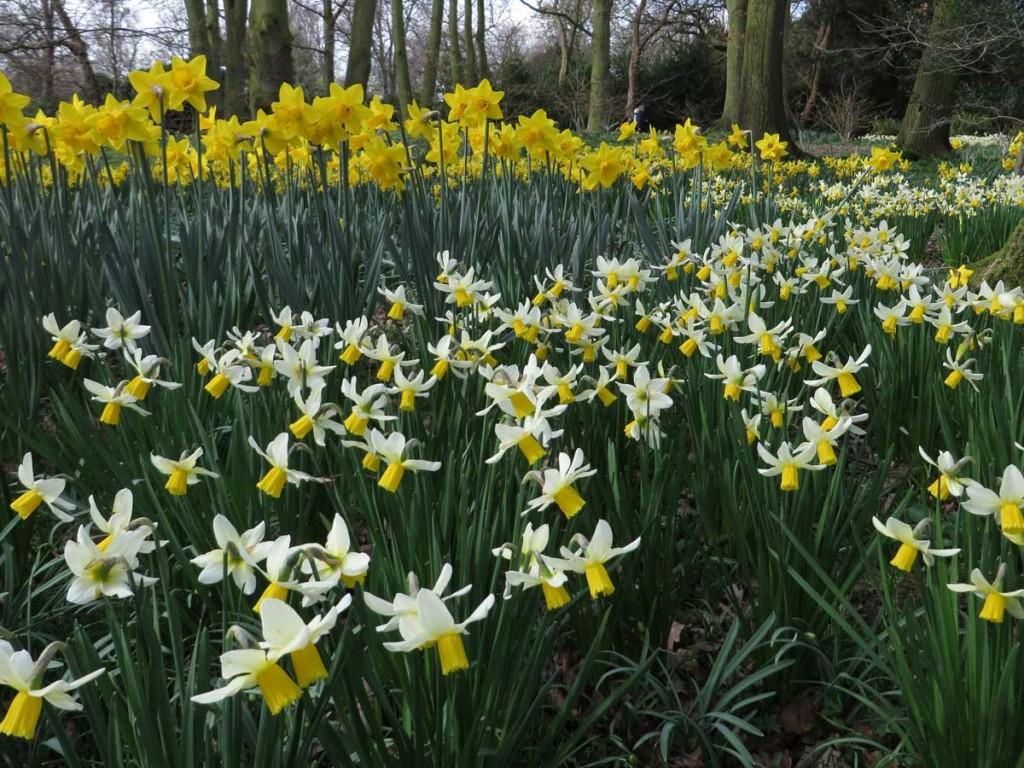 early spring magic garden mentor