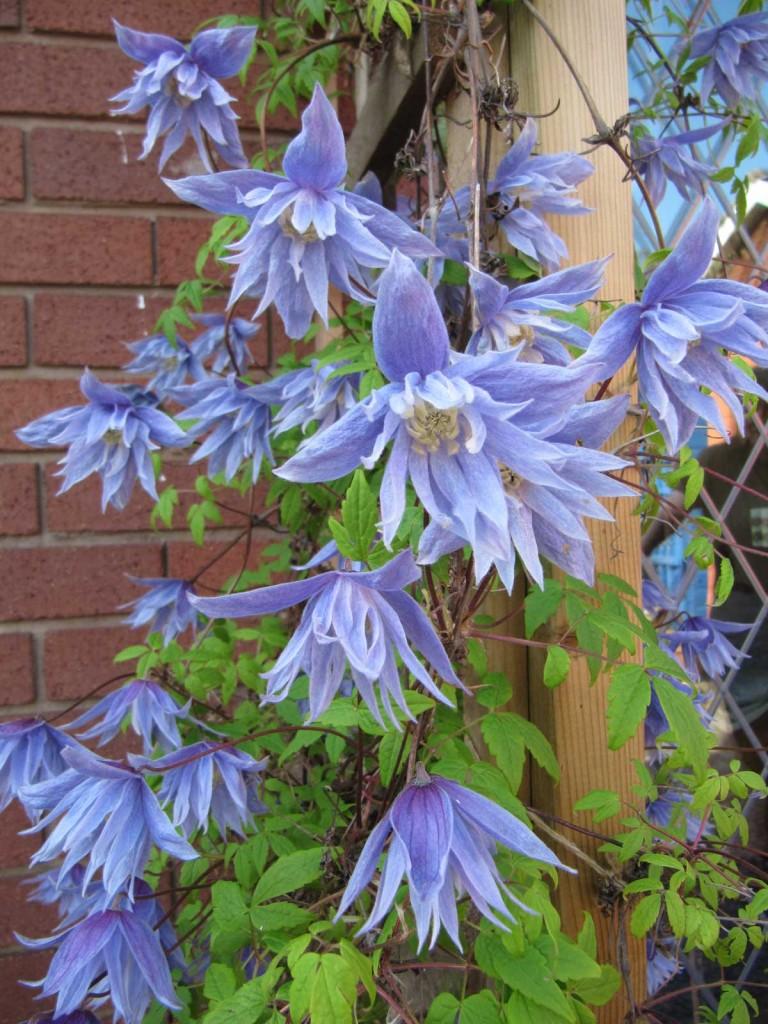 colourful spring garden mentor. Black Bedroom Furniture Sets. Home Design Ideas