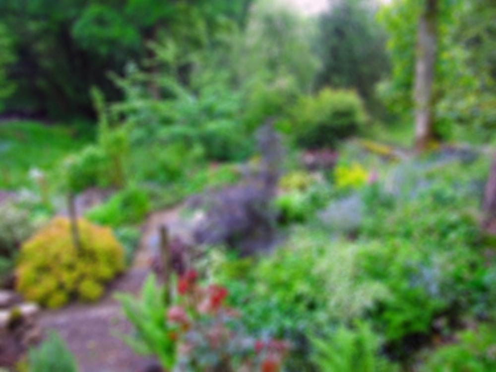 Garden Mentor - Blurred Garden